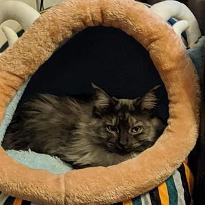 New Bed - Kiki