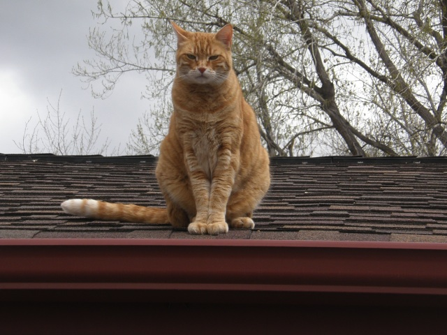 Roof cat is watching you mod(sturbate)